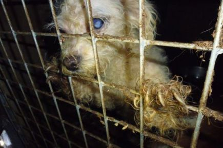 puppy farm image